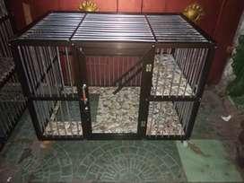 Rumah kucing ras murah