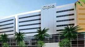 online vacancies in cipla pharmacy company .