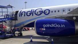 Job - indigo Airlines Opened @ CCE , Cabin Crew, Luggage Dept. , Front