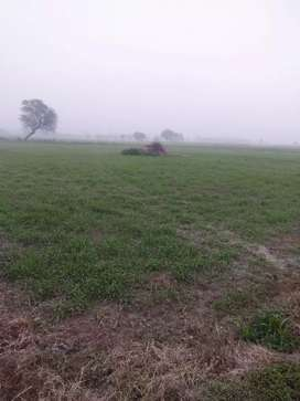Farmhouse /Agricultural land for sale
