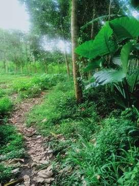 Tanah kebun bisa d jual atau disewaka