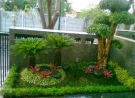 Jual rumput dan tanaman hias