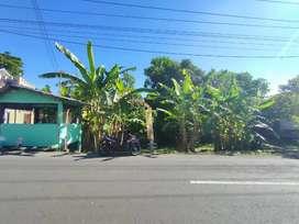 Dijual Tanah Pekarangan Termurah di Jalan Raya Berbah