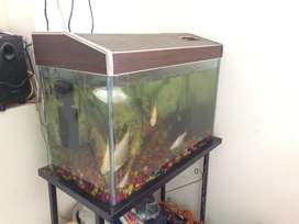 I am sellong my aquarium