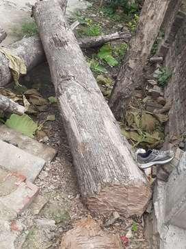 Sagwan wood 10 feet 2 wood
