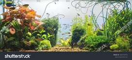 aquarium mantnes and services
