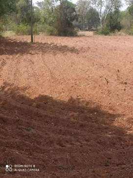 Red soil 62 Kunta agriculture land for sale in Hullenahalli Village