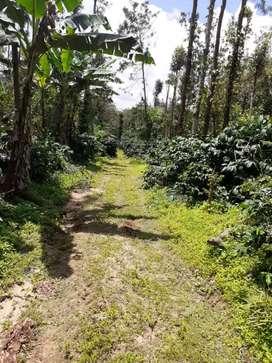 9.5 acre coffee estate for sale  Single boundary