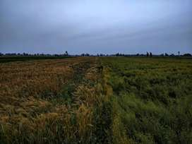 Agricuture land for sale
