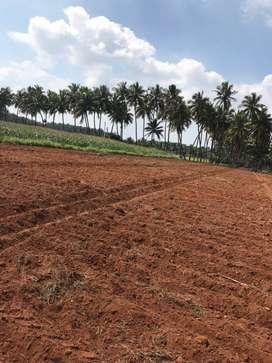 Agricultural land/farm land/farm house/coconut farm