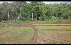Tanah Plus Sawah Luas Bisa Untuk Tempat Usaha Peternakan Di Cilacap