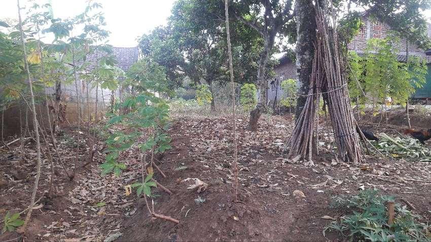 Tanah disewakan di Desa Leyangan