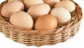 Pure Desi Eggs (Deals)