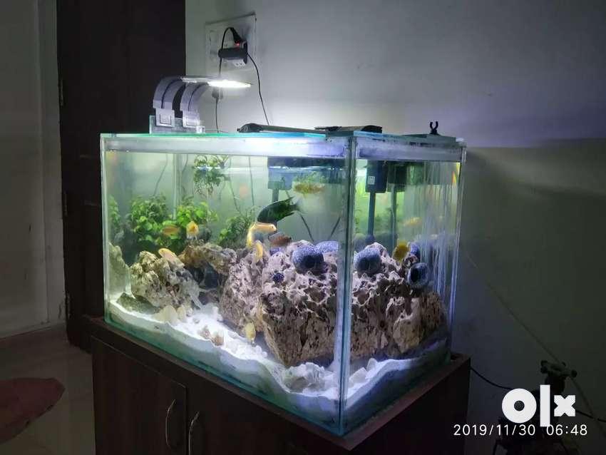 Fish aquarium 0