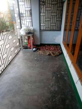 Assam type 3bhk residential house available for rent at Beltola