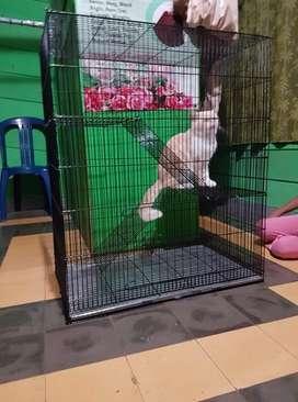 New kandang kucing tingkat 2