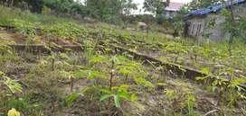Jual tanah kapling murah