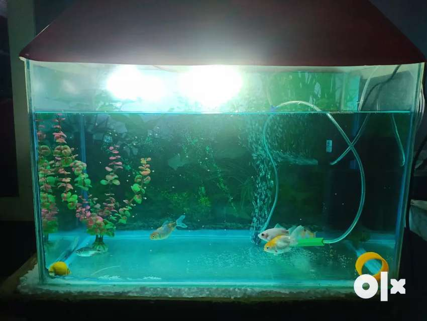 Fhish Aquarium 0