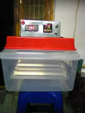 Incubator for country Chicken