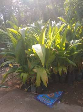 Plant sale for your home