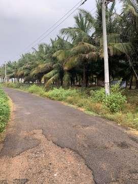 Coconut farm/agriculture land/agricultural land/farm land/farm house