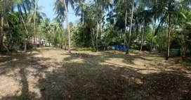 Plot rich in coconut tree for sale