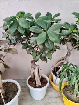 Ornamental Plants with pots