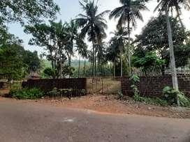 Coconut farm beside the road, in honnavar taluk, Uttar kannada
