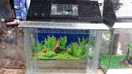 Aquarium variasi tutup kaca ukuran 45cm