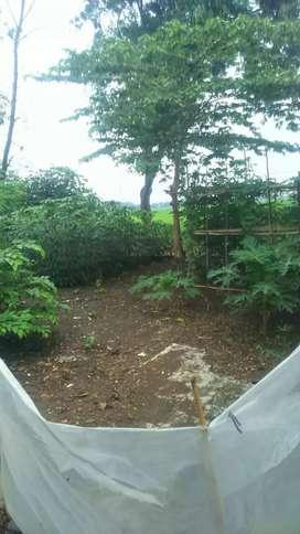 Tanah untuk rumah dan investasi di Tegal sawah benggol