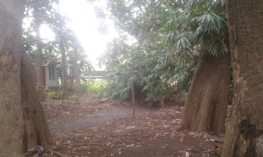 Disewakan Lahan Hutan