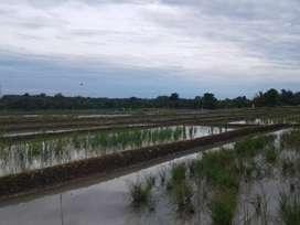 Tanah dijual beserta sawit, sawah dan kolam