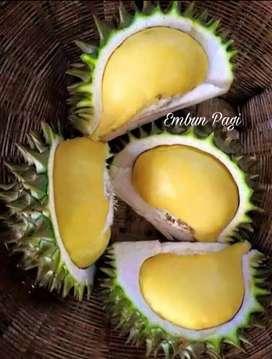 Bibit Buah Durian Karatungan asli Kalimantan