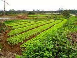 Agriculture land for sale near gandhinagar