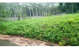Tanah murah perkebunan jalur kuning