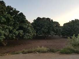 10 acres agriculture land is available for sale