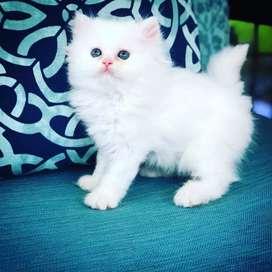 So very cute kittens and intelligent kitten