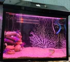 fish tank aquarium with equipment