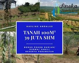 Investasi masa kini, tanah kebun kurma,durian,vanili