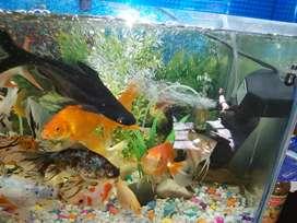 Fish aquirium 2 feet