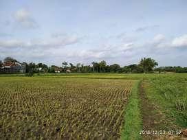 Tanah Sawah Dijual (BU) 1Jt/m2 Nego dekat SMPN 3 Kertosono