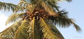 1.4 Acre agriculture land for sale in Sholavandan, Madurai