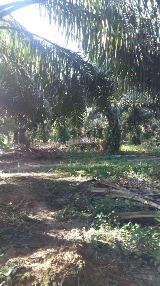 jual kebun sawit luas 40 ha