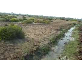 Aggricultural Survey Land 16+ Acres | Near Chuhar Jamli City, Jati ,