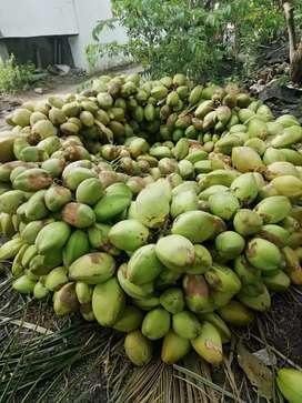 Manikanta coconut