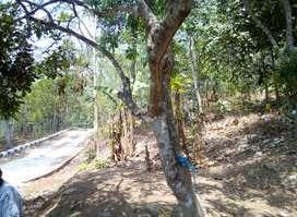 Tanah subur di cintawargi, tegalwaru, loji, karawang barat