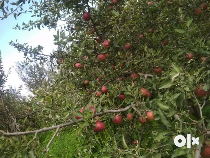 Farm fresh fruits . Pure herbal