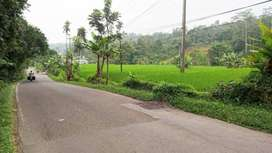 Tanah Sawah Pinggir Jalan Raya Bojong Wanayasa Purwakarta Dijual Murah
