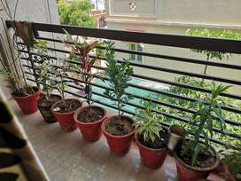 Available 2 bhk Flat for sale near new cg road chandkheda