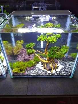 Aquascape aquarium bonsai